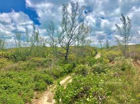 COCO BAY LOT 58,Green Turtle Cay