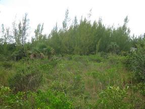 GREEN TURTLE CLUB SUBDIVI,Green Turtle Cay