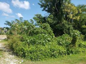TROPICAL DRIVE,Other New Providence/Nassau