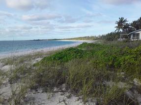 BAHAMA PALM SHORES,Bahama Palm Shores